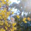 植物園でのんびり撮影してきた!「大柿花山」散策 その1