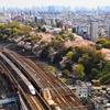 桜満開の飛鳥山 と E4系^^