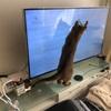 動物病院へ行きました~猫さん膀胱炎~