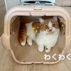 キャリーケースの中からお部屋の小旅行を楽しむ愛猫。(運ぶ飼い主の腕はプルプルw)