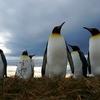 2011年 至福の楽園 秘密のペンギン村