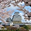 姫路城のさくら風景