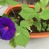 種を蒔いたのは6月初め