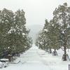 沢山の雪に大満足です。