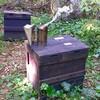 森の中にて、ミツバチと