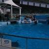 【写真】2年前の名古屋旅行(2018年7月10日・11日)の写真その6:名古屋港水族館(続)