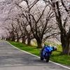 2021年桜最速!