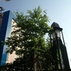 築地場外『長生庵』『YAZAWA COFFEE ROASTERS』。(2017.5.20土)