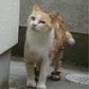 外猫。。洗いたい。。。(切望)