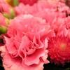 ピンクのお花。。。