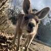 本家オーストラリア以外で唯一クオッカ(クアッカワラビー)に会える場所:埼玉県こども動物自然公園(埼玉県東松山市)