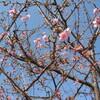 ♪春めいてきたね♪