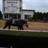 <新潟大賞典 予想>2000mで本格化した馬から!