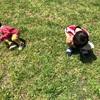 親も学ぶことが多い公園遊び