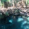旅の癒し、ジャングルのオアシス♡マタランカ温泉♡ ダーウィン目指すならここに寄ってね【オーストラリア ラウンドのすすめ】