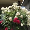 2020-05-23 薔薇御殿