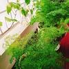 初めての観葉植物植え替え作業