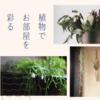 植物でお部屋を彩る 〜癒しとお洒落を一度に叶えよう〜