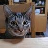 猫をテーブルに上がらせないようにすることはできるのか