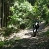 林道シリーズ(仮)|府道733付近をウロチョロ