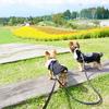 【富士見高原リゾート花の里】愛犬と一面の花畑!