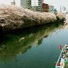 大岡川の桜Vol.2