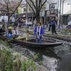 京都・白川、高瀬川の花見は楽しい。