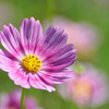 10月22日の誕生花と花言葉を紹介します。
