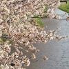 ◆'20/04/11  桜を観に