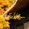 晩秋 まだまだ秋色みつかります♪