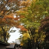 亀八さんの黄葉…