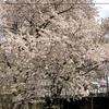 徒歩でぶらぶら♪小樽駅から手宮線跡地まで小樽の観光スポット巡り