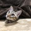 【猫ブログ】今日の我が家
