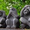 神社に祀られてる猿は悪い物を去る?