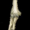 【解剖・生理学】肘関節の構造(腕尺、腕橈、橈尺関節)と特徴(ヒューター三角)