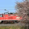 4/9 桜とごとぉ