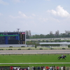 新潟芝1000m(2歳戦)種牡馬別ランキング