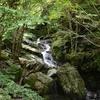 ケヤキザコ遊山「森が近い国」