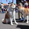 【秋田犬・Vlog】秋田犬展覧会に行ってみた!