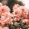 お花の定期便bloomeelifeを使ってみた【第二弾】