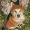 ゲームに出てくる犬のレビュー【その3】