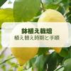 【レモン栽培】鉢植え柑橘類の植え替えの時期と方法