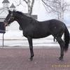 2022年新種牡馬:ビーチパトロール