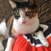 【愛猫日記】毎日アンヌさん#12