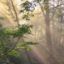 夜明けの森の日々
