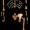 人類の進化:アウストラロピテクス各種(前編 「華奢型」グループ)