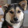 今月10日に保護した迷い犬ボーイの近況報告