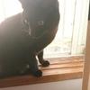 不思議な美魔猫 ~2匹の成長過程~