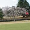 桜が満開になりました