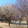 ✿春が、やって来ました✿
